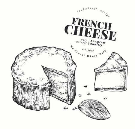French cheese illustration. Hand drawn vector blue cheese illustration. Engraved style camembert. Retro brie cheese illustration. Иллюстрация