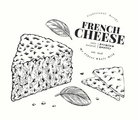 French cheese illustration. Hand drawn vector blue cheese illustration. Engraved style gorgonzola. Retro roquefort cheese illustration.