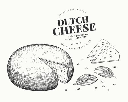 Dutch cheese illustration. Hand drawn vector dairy illustration. Engraved style gouda head. Retro food illustration.
