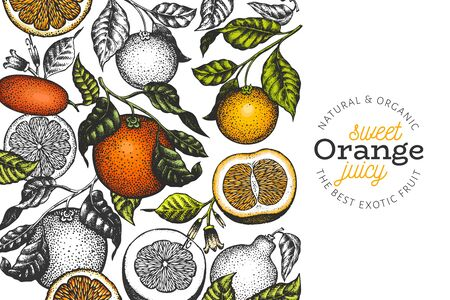 Orange branches design template. Hand drawn vector colour fruit illustration. Engraved style banner. Retro citrus banner.