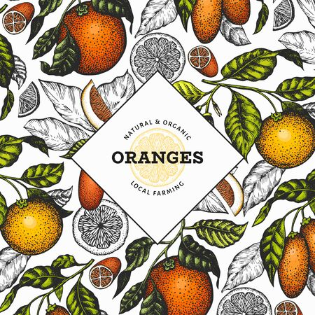Citrus design template. Hand drawn vector color fruit illustration. Engraved style frame. Retro citrus banner. Ilustrace