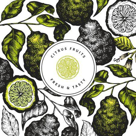Bergamot branch design template. Kaffir lime frame. Hand drawn vector fruit illustration. Retro style citrus background.