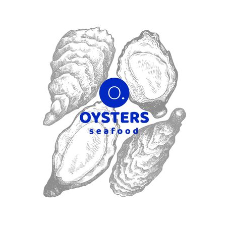 Oysters illustrations. Hand drawn vector seafood illustration. Engraved style mollusks. Vintage image