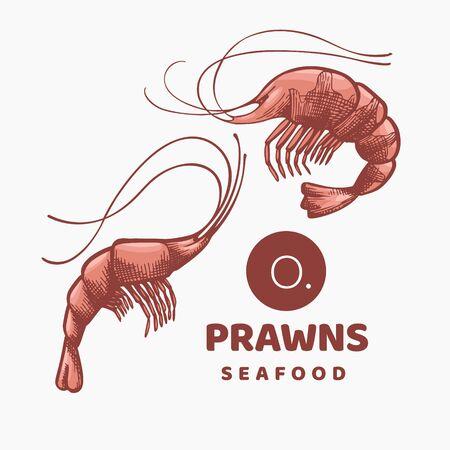 Prawns colored illustrations. Hand drawn vector seafood illustration. Engraved style shrimps. Retro sea food image