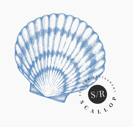 Scallop illustration. Hand drawn vector seafood illustration. Engraved style seashell. Vintage mollusk image. Pearl shell illistration