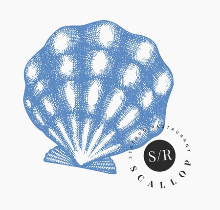 Scallop illustration. Hand drawn vector seafood illustration. Engraved style seashell. Vintage mollusk image. Pearl shell illustration