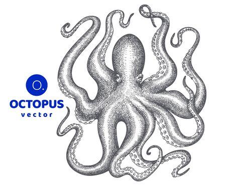 Octopus illustration. Hand drawn vector seafood illustration. Engraved style squid. Vintage zoology image Ilustração