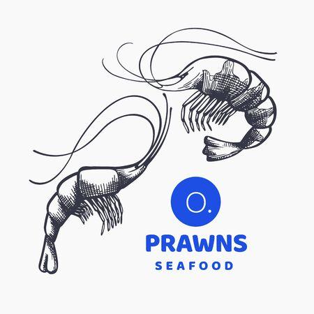 Prawns illustrations. Hand drawn vector seafood illustration. Engraved style shrimps. Retro sea food image Stock fotó - 138444503