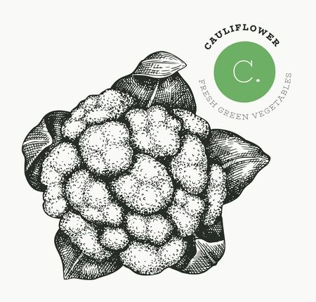 Hand drawn sketch style cauliflower cabbage. Organic fresh food vector illustration isolated on white background. Vintage vegetable broccoli illustration. Engraved style botanical picture.