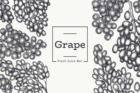 Grape design template. Hand drawn vector grape berry illustration. Engraved style vintage botanical banner.  イラスト・ベクター素材