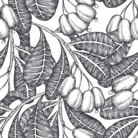 Hand drawn sketch Cashew seamless pattern. Organic food vector illustration on white background. Vintage nut illustration. Engraved style botanical background.