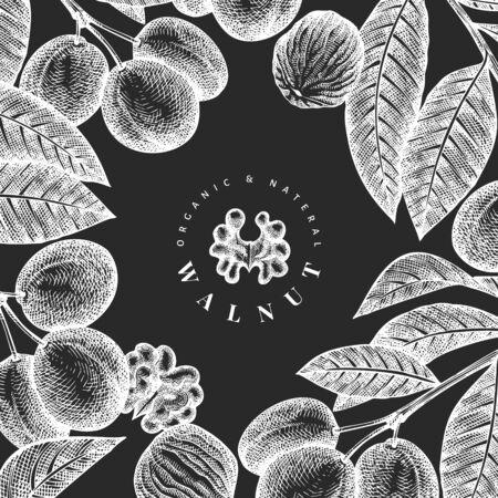 Hand drawn sketch walnut design template. Organic food vector illustration on chalk board. Vintage nut illustration. Engraved style botanical background.