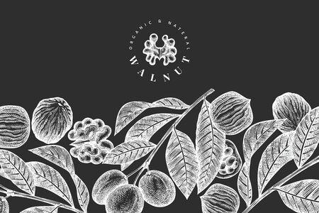 Hand drawn sketch walnut design template. Organic food vector illustration on chalk board. Vintage nut illustration. Engraved style botanical background. Vecteurs