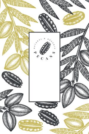 Hand drawn pecan branch and kernels design template. Organic food vector illustration on white background. Retro nut illustration. Engraved style botanical picture.
