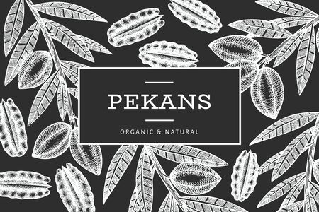 Hand drawn pecan branch and kernels design template. Organic food vector illustration isolated on chalk board. Retro nut illustration. Engraved style botanical picture.