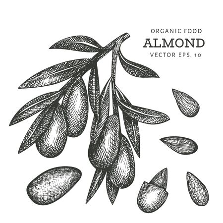 Hand drawn sketch almond branch. Organic food vector illustration isolated on white background. Vintage nut illustration. Engraved style botanical picture. Ilustracja