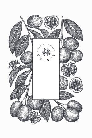 Hand drawn sketch walnut design template. Organic food vector illustration. Vintage nut illustration. Engraved style botanical background.  イラスト・ベクター素材