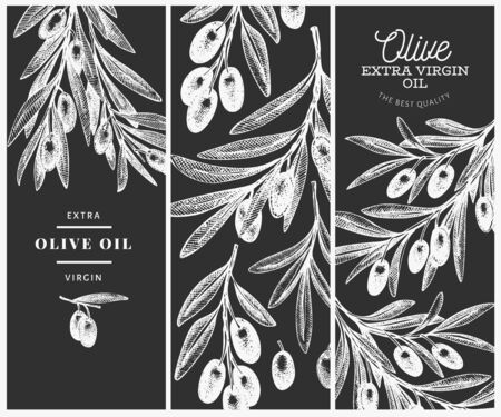 Olive branch design template. Hand drawn vector food illustration on chalk board. Engraved style mediterranean plant. Vintage botanical picture. Иллюстрация