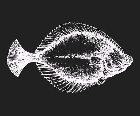 Hand drawn flounder illustration. Vector fish illustration on chalk board. Illustration