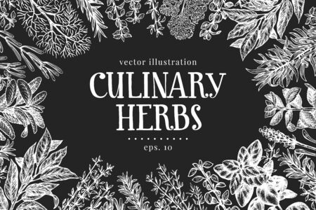 Hand drawn culinary herbs design template. Vector illustrations on chalk board. Vintage food background Banco de Imagens - 150277288