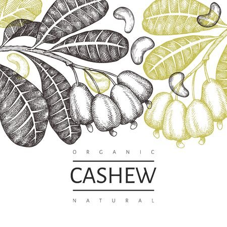 Hand drawn sketch cashew design template. Organic food vector illustration on white background. Retro nut illustration. Engraved style botanical background.