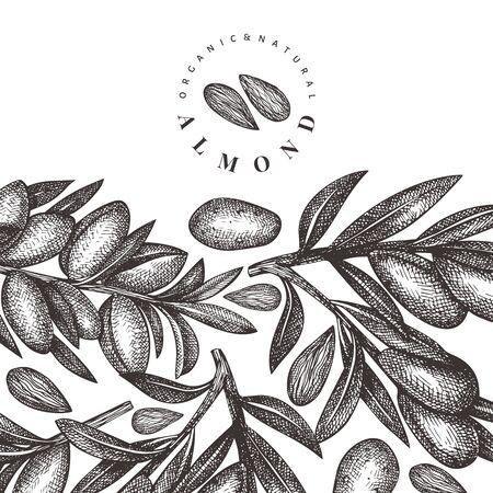 Hand drawn sketch almond design template. Organic food vector illustration. Vintage nut illustration. Engraved style botanical background.