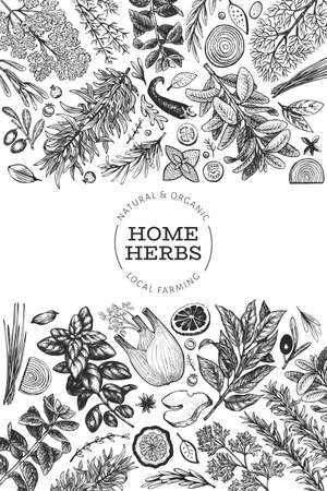 Culinary herbs banner template. Hand drawn vintage botanical illustration. Engraved style. Retro food background. 向量圖像