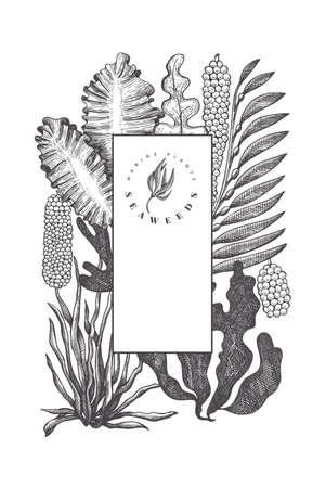 Seaweed design template. Hand drawn vector seaweeds illustration. Engraved style sea food banner. Vintage sea plants background