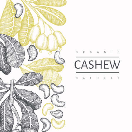 Hand drawn sketch cashew design template. Organic food vector illustration on white background. Vintage nut illustration. Engraved style botanical background. Vecteurs