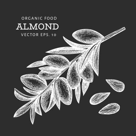 Hand drawn sketch almond branch. Organic food vector illustration isolated on chalk board. Vintage nut illustration. Engraved style botanical picture. Vecteurs
