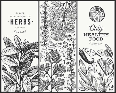 Culinary herbs banner template. Hand drawn vintage botanical illustration. Engraved style. Vintage food background.