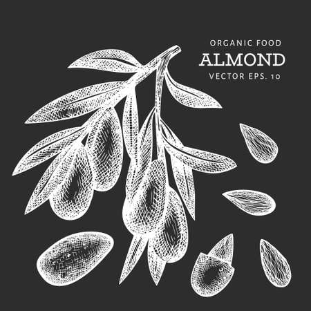 Hand drawn sketch almond branch. Organic food vector illustration isolated on chalk board. Vintage nut illustration. Engraved style botanical picture. Vettoriali