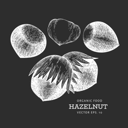 Hand drawn sketch hazelnut kernels. Organic food vector illustration isolated on chalk board. Vintage nut illustration. Engraved style botanical picture. 向量圖像