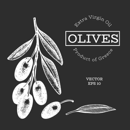 Olive branch illustration. Hand drawn vector food illustration on chalk board. Engraved style mediterranean plant. Retro botanical picture. 矢量图像