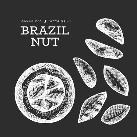 Hand drawn brazilian nut branch and kernels. Organic food vector illustration on chalk board. Retro nut illustration. Engraved style botanical picture. 矢量图像
