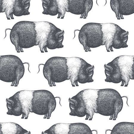 Hand drawn farm animals background. Vector pig seamless pattern. Retro hog illustration