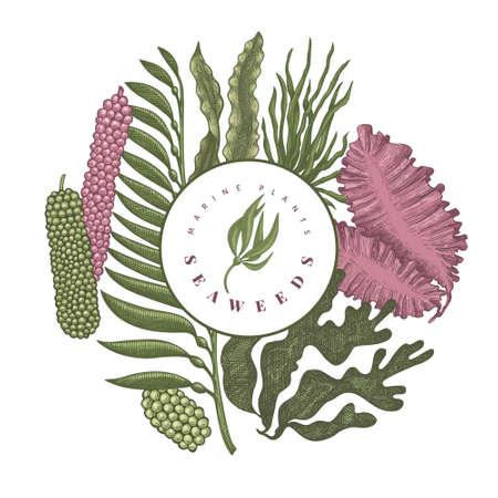 Seaweed color design template. Hand drawn vector seaweeds illustration. Engraved style sea food banner. Retro sea plants background 矢量图像