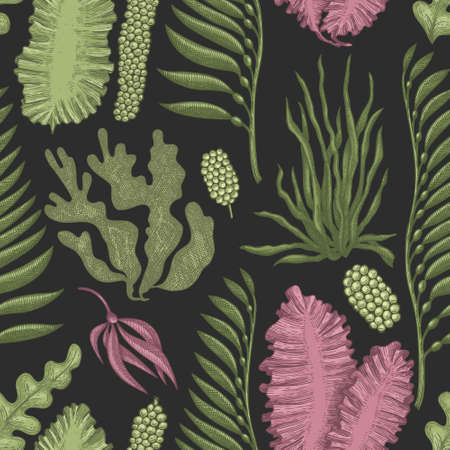 Seaweed seamless pattern. Hand drawn  seaweeds color illustration. Engraved style sea food banner. Retro sea plants background