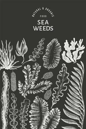 Seaweed design template. Hand drawn vector seaweeds illustration on chalk board. Engraved style sea food banner. Vintage sea plants background