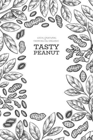 Hand drawn peanut branch and kernels design template. Organic food vector illustration on white background. Retro nut background. Engraved style botanical picture. Vecteurs