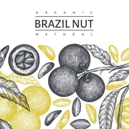 Hand drawn brazilian nut branch and kernels design template. Organic food vector illustration on white background. Retro nut illustration. Engraved style botanical banner.