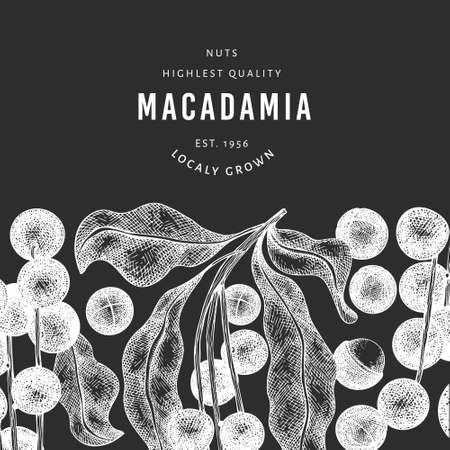 Hand drawn macadamia branch and kernels design template. Organic food vector illustration on chalk board. Vintage nut illustration. Engraved style botanical banner.