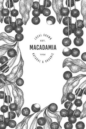 Hand drawn macadamia branch and kernels design template. Organic food vector illustration on white background. Retro nut illustration. Engraved style botanical banner.