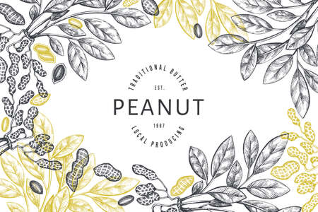 Hand drawn peanut branch and kernels design template. Organic food vector illustration on white background. Retro nut background. Engraved style botanical picture. 일러스트