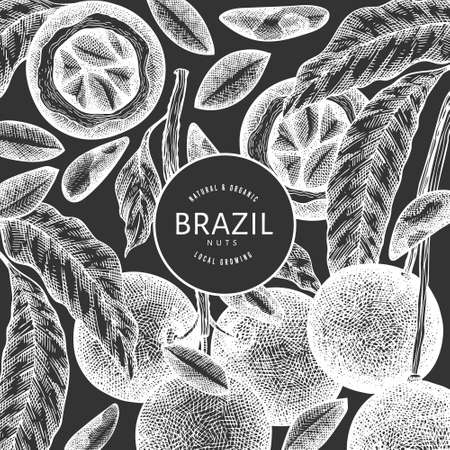 Hand drawn brazilian nut branch and kernels design template. Organic food vector illustration on chalk board. Retro nut illustration. Engraved style botanical banner.  イラスト・ベクター素材