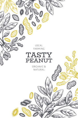 Hand drawn peanut branch and kernels design template. Organic food vector illustration on white background. Retro nut background. Engraved style botanical picture. Ilustrace