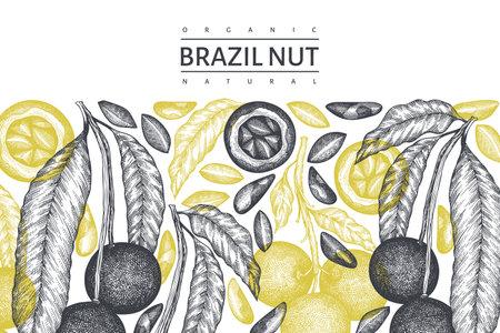 Hand drawn brazilian nut branch and kernels design template. Organic food vector illustration on white background. Retro nut illustration. Engraved style botanical banner. Vecteurs