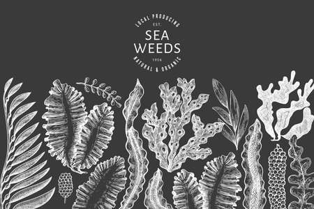 Seaweed design template. Hand drawn vector seaweeds illustration on chalk board. Engraved style sea food banner. Vintage sea plants background