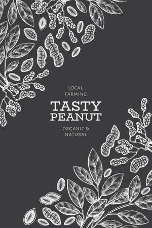 Hand drawn peanut branch and kernels design template. Organic food vector illustration on chalk board. Retro nut illustration. Engraved style botanical picture.