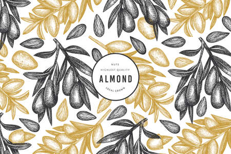 Hand drawn sketch almond design template. Organic food vector illustration. Retro nut illustration. Engraved style botanical background. Ilustrace